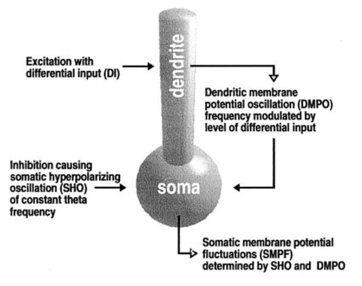 Lengyel et al, Hippocampus 2003 - summary figure